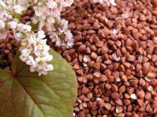 O sarraceno pode ser utilizado tanto em grãos como em farinha.